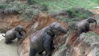 A baby elephant rescued by wildlife officers !