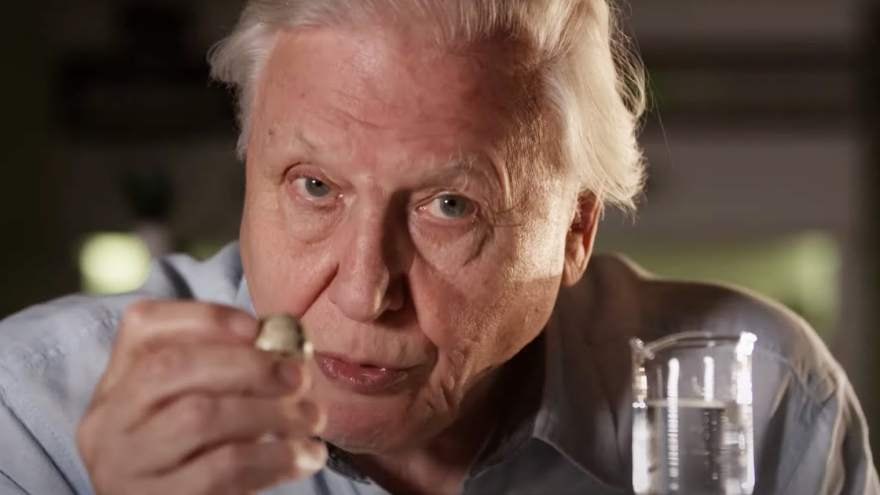 Download How Are Eggs Made?   Attenborough's Wonder of Eggs   BBC Earth