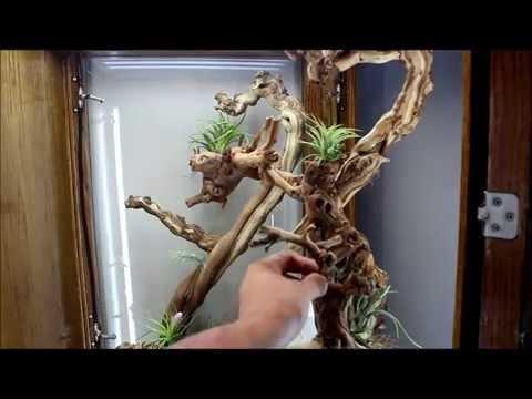 Custom Built Chameleon Cage Vivarium - Ambilobe Panther Chameleons