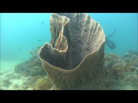 Giant clam   Philippines puerto galera 2017