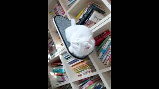 CATTO 캣타워 선반형캣타워 책장 책상 선반 설치형 …