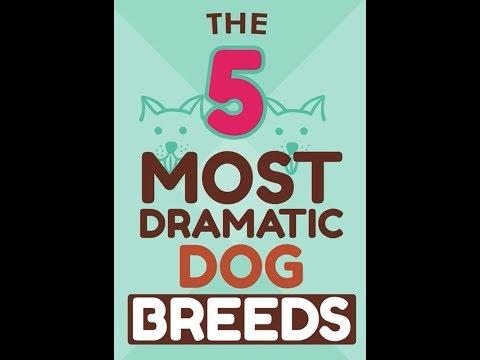 5 Most Dramatic Dog Breeds