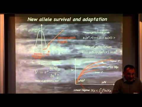 Statistical Physics Views of Evolution II