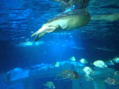 aquarium porto