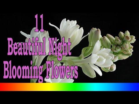 11 Beautiful Night Blooming Flowers