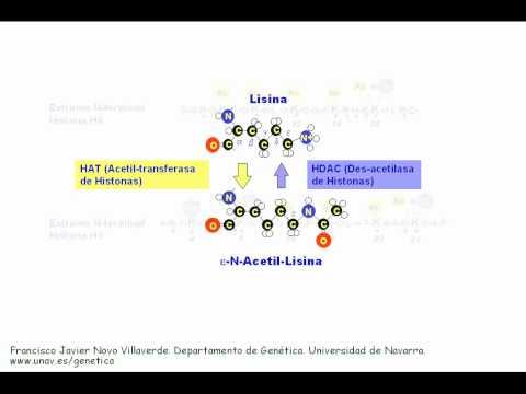 La acetilación de histonas