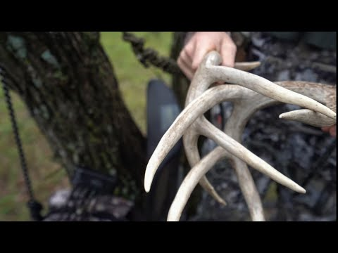 Best Deer Hunting Call Ever