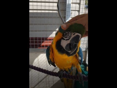 Building  Xlarge Parrot Cage Aviary (macaw) #5