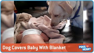 Loving Dog Covers Baby With Blanket
