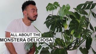 Monstera Deliciosa Care + Repotting | House Plants