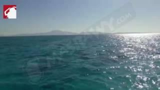 بالفيديو- بعد حكم ''الإدارية العليا''.. أول رد فِعل من أمام جزيرة تيران