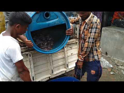 Fresh Live Barbel Fish Wholesale Market।Fish Wholesale Market & Great Crowd।Fish Market In Village