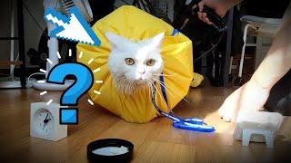 고양이 목욕 후에 빠르고 편하게 말리는 방법