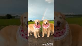 🤣 Funniest 🐶 Dogs and 😻 Cats - Awesome Funny Pet Animals Life Videos 😇 (part 2)
