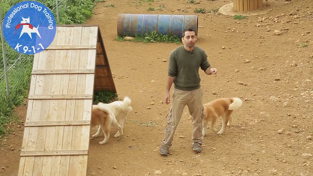 Why Dogs Bark At Strangers What Can We Do About It Youtube,Indoor Kitchen Garden Ideas