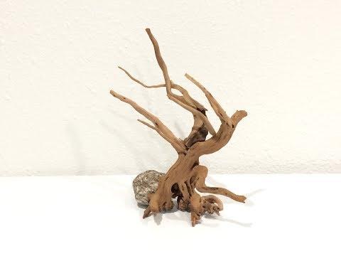 how-to-make-a-bonsai-for-aquarium