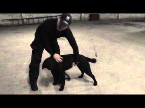 как научить собаку команда стоять