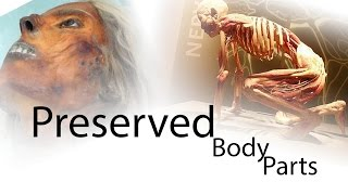Top 5 Famous Persons Body Parts Preserved