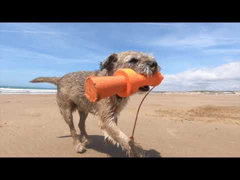 Border Terrier Jack in France 2019