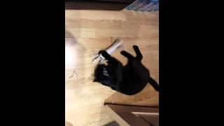Простые игрушки для кота
