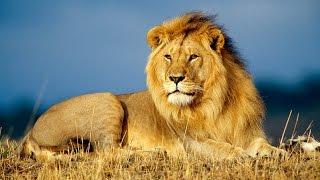 Африка крупным планом — Призраки Серенгети (Документальные фильмы, передачи HD)