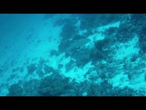 Maldivas Leopardo morenas y langostas