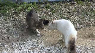 雌同士の喧嘩.