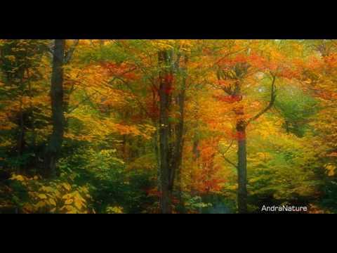Golden Autumn [Raul Di Blasio - Nuestro Poema]