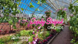 Orchid and Tropical Bonsai Show: Eye Candy