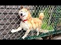 NOT THE SMARTEST DOGS doing DUMB THINGS 😹 LAUGH at FUNNY DOGS compilation