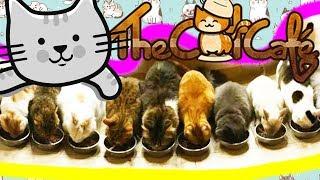 JAPAN CAT CAFE'! IO E SASCHA ENTRIAMO NEL BAR PIENO DI GATTI IN GIAPPONE!