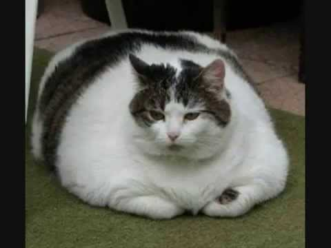 Funny Pictures Ep.1  - Fat Cats + Fat Dogs