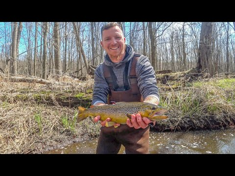 Creek Fishing For Big Browns - 20+ Fish Morning!