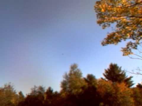 Want to Watch My Backyard Bald Eagle