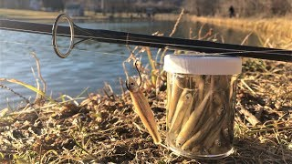 Drop Shot TROUT Fishing with DEAD Minnows