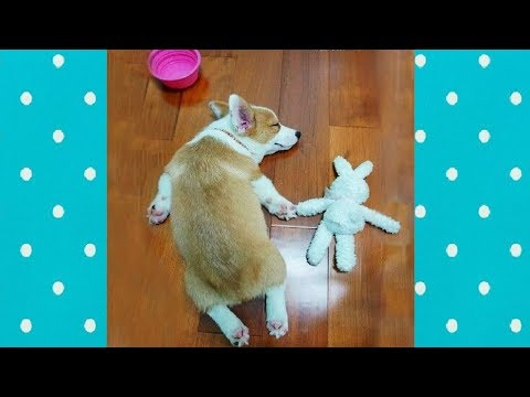 CUTE Dog playing and cuddling Toys everywhere