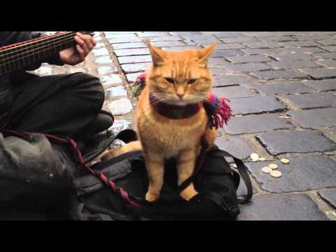 'A Street Cat Named Bob' The Big Issue cat - iPhone 4s 1080p