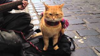 """A Street Cat Named Bob"" The Big Issue cat - iPhone 4s 1080p"