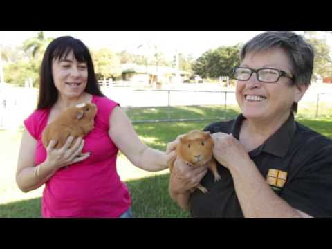 Caring for Guinea Pigs With Health Issues