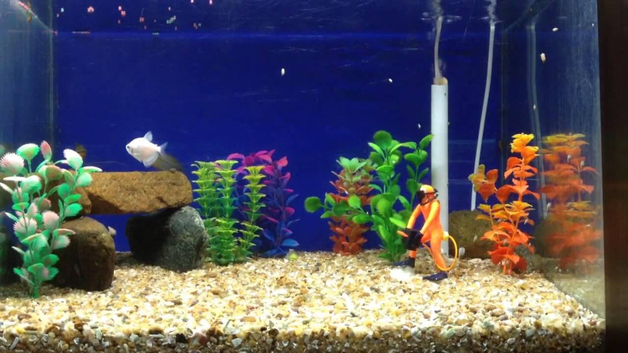 Fish for aquarium bangalore - Bangalore Aquarium