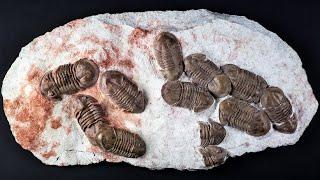 Последние находки археологов, которые удивили учёных и раскрыли несколько секретов