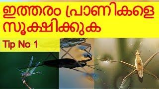 Beware of These insects in Fish Tank | Daily Tips | Tip No 1 | Vivek Parayil | Parayil Aqua