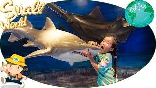 เด็กจิ๋วเที่ยว Ocean Park ตอน11 ฉลาม แมงกะพรุน [N