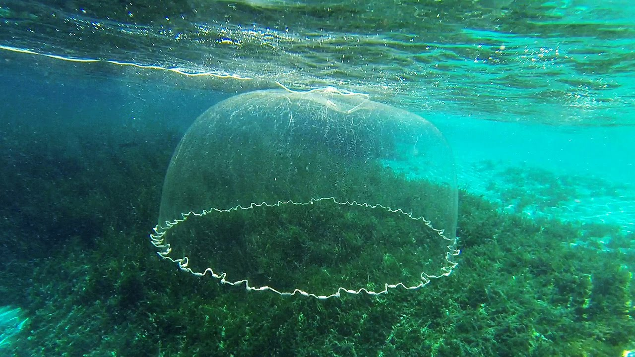 Cast net falling underwater youtube for Throw nets for fishing