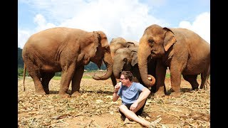 PLAYING WITH ELEPHANTS - Elephant Nature Park, Chiang Mai Thailand
