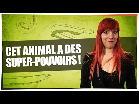 Cet animal a des super-pouvoirs - Castor Mother #11 - String Theory HD