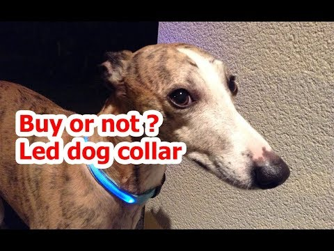 Led dog collar Buy or not ? Glow in the dark, Collier pour chien lumineux à LED, Acheter ou pas ?
