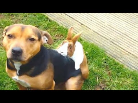 Best Funny Animals Compilation 2016 Funny Animal Videos Funny Dog  Videos | Part 1
