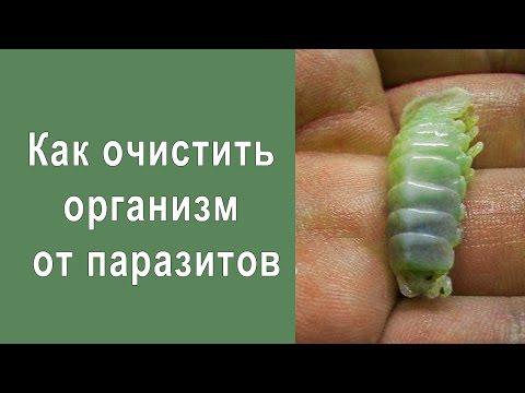 Как Очистить Организм От Паразитов Без вреда для Здоровья
