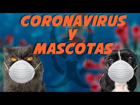 Coronavirus y Mascotas ☣🐶🐱 | ¿Les afecta? 🤔